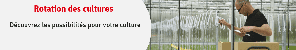 Rotation des cultures maraichage